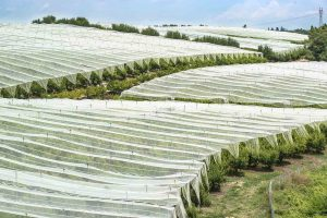 Industrial Textiles – Agricultural and Horticultural